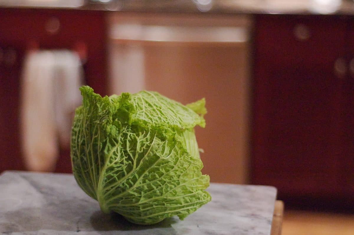Head of savoy cabbage