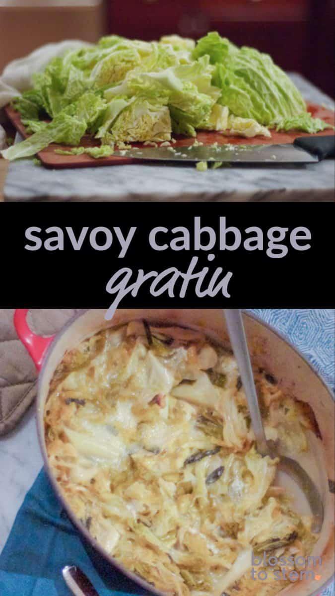 Savoy Cabbage Gratin