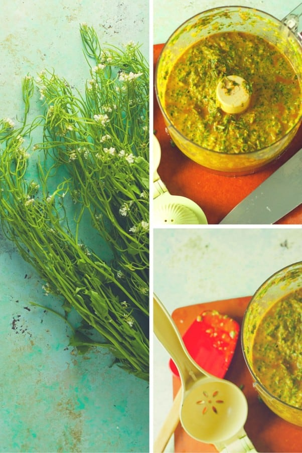 What to do with Wild Garlic Mustard Greens? Make Garlic Mustard Chimichurri. From Blossom to Stem | Because Delicious www.blossomtostem.net