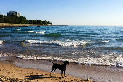 Inka at the beach. Photo by Dan Busha.
