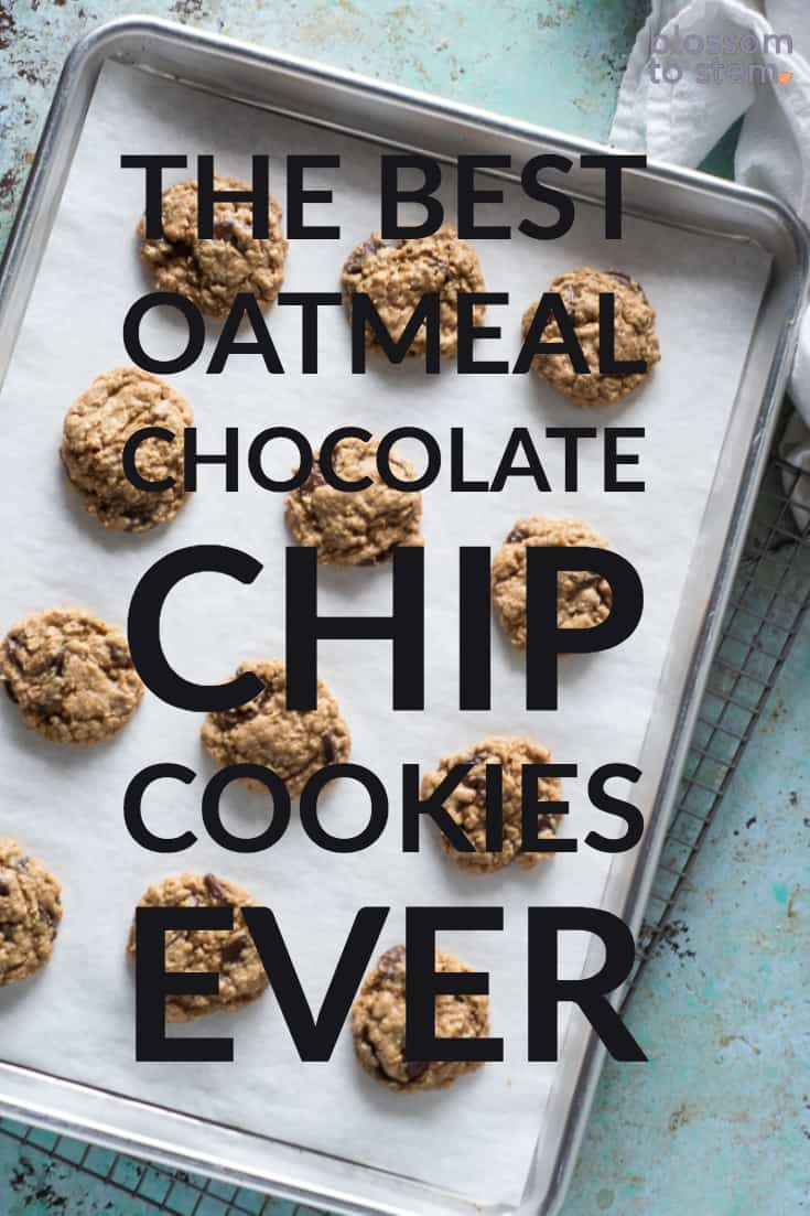 The Best Oatmeal Chocolate Chip Cookies Ever